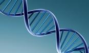 Hà Nội: Xét nghiệm ADN để làm rõ đơn tố cáo 2 đảng viên ngoại tình