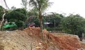 Thanh Hóa: Sai phạm trong cưỡng chế, chủ tịch phường phải bồi thường 5 cây dừa cho dân