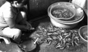 Tàn ác khi bơm tạp chất vào tôm ngay ở chợ đầu mối phía Nam Hà Nội