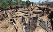 Vụ phá rừng phòng hộ ở Quảng Nam: Đề nghị truy tố 2 bị can