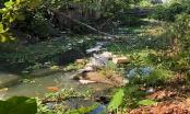 """Thừa Thiên Huế: Chính quyền địa phương """"bất lực"""" nhìn sông ô nhiễm"""