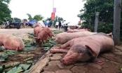 Trang mạng tung tin sai sự thật về dịch tả lợn sẽ bị xử lý