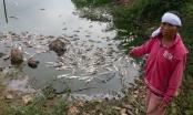 13 tấn cá chết bất thường, công an xã bị tố lộng quyền