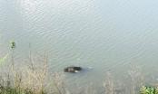 Phát hiện 3 thi thể nổi trên nhánh sông Tiền