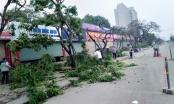 Xây dựng nút giao cầu vượt Hoàng Quốc Việt - Nguyễn Văn Huyên: Hơn 30 cây gỗ sưa sẽ đi về đâu?