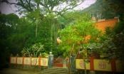 Chiêm ngưỡng làng cổ nghìn năm tuổi ẩn mình giữa xứ Thanh
