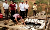 Báo cáo Thủ tướng vụ cá lồng chết hàng loạt tại Thanh Hóa