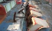 Ninh Bình: Cận cảnh sân vận động trăm tỷ bỏ hoang cỏ mọc um tùm