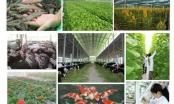 Phó Thủ tướng Trịnh Đình Dũng dự Hội nghị toàn quốc sơ kết 5 năm thực hiện Đề án tái cơ cấu nông nghiệp