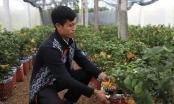 Lạ kỳ 'bàn tay Phật' trên chậu cây mini, anh nông dân thu tiền tỷ