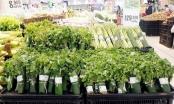 Bảo vệ môi trường: Dùng lá chuối tự nhiên thay túi nylon bọc thực phẩm