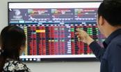 Cổ đông lớn của Công ty cổ phần Môi trường Đô thị Quảng Ngãi bị xử phạt hành chính