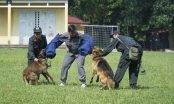 Chiêm ngưỡng khả năng đặc biệt trong trấn áp tội phạm của chó nghiệp vụ