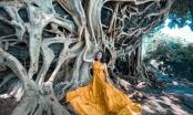 Cây si cổ thụ có bộ rễ khủng hút du khách tới chụp ảnh ở Đắk Lắk