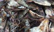 Thanh Hóa: Bắt giữ hơn 21 tấn mực khô không rõ nguồn gốc