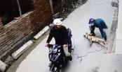 [Clip]: Cẩu tặc dùng súng điện bắt trộm chó