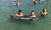 Khánh Hòa: Cá heo nặng 60kg dạt vào bờ biển Nha Trang