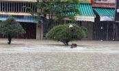 Bất cập quy hoạch 'góp phần' gây ngập lụt Đà Nẵng