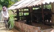 Vốn chính sách vun mầm no ấm ở Minh Long