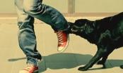 Phòng hiểm họa do chó cắn