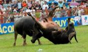 Phòng dịch viêm phổi Corona, Phú Thọ tạm hoãn tổ chức lễ hội