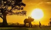 Khoảnh khắc gia đình đẹp nhất năm 2020 gọi tên nhiếp ảnh gia Việt Nam