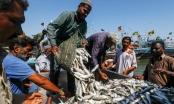 Ngư dân Pakistan lo tàu cá Trung Quốc đánh bắt cạn kiệt tài nguyên