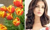 Tulip - Loài hoa mang tên Hoa hậu đẹp nhất mọi thời đại