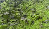 Ngôi làng ma bị cây xanh nuốt chửng