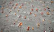 Hàng nhìn thi thể bọc vải được phơi bày sau màn mưa lớn