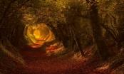 Đường hầm kỳ lạ có một không hai... từ cây xanh