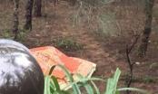 Thanh Hóa: Phát hiện kỹ sư Hàn Quốc tử vong tại rừng phi lao