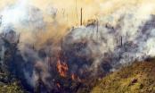 Vụ cháy Vườn Quốc gia Hoàng Liên: 8 hec ta rừng bị thiêu rụi