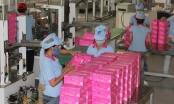 Tập đoàn của Nhật Bản mua lại nhà sản xuất khăn giấy hàng đầu Việt Nam