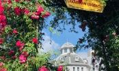 Vườn hồng khổng lồ tại Sun World Fansipan Legend đón nhận kỷ lục Guinness Việt Nam