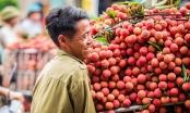 Trái vải thiều của Việt Nam sẽ được Trung Quốc nhập khẩu nhiều trong thời gian tới
