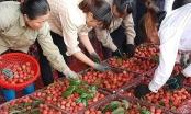 Bắc Giang: Quản lý mã số vùng trồng, cơ sở đóng gói phục vụ xuất khẩu