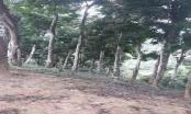 Bức xúc vì đồi lim trăm tuổi bị 'xẻ thịt' ở Lạng Sơn