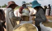 Việt Nam nhập khẩu hơn 1,5 triệu tấn thóc từ Campuchia