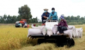 Xuất khẩu gạo giảm mạnh, nhiều doanh nghiệp đóng cửa ngừng sản xuất