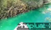 Bình Dương: Nước mương chuyển màu xanh, bốc mùi hôi như thuốc trừ sâu