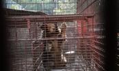 Bình Dương: Giải cứu 7 cá thế gấu gựa