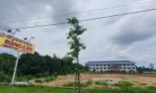 Bà Rịa – Vũng Tàu: Công ty Thăng Long bị xử phạt 200 triệu do vi phạm trong lĩnh vực đất đai
