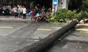 TP HCM: Cây bật gốc trong cơn mưa lớn, đè trúng 2 người