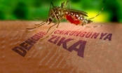 Bộ Y tế: Tăng cường công tác phòng chống dịch bệnh do virus Zika