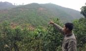 Kỳ 2 - Phú Thọ: TAND huyện Thanh Sơn làm ngơ quyết định của tòa án tỉnh Phú Thọ