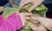 7 học sinh bị ngộ độc do ăn hạt ngô đồng rơi trên sân trường