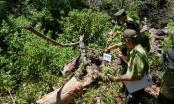 Đà Nẵng: Cần đánh giá khách quan đối với việc dọn vệ sinh rừng ở Sơn Trà