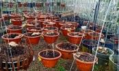 Bắt giam nhóm đối tượng chuyên ăn trộm hoa lan trị giá hàng tỷ đồng ở Lâm Đồng