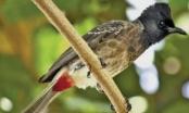 Vụ Giám đốc sở 30 tuổi bị mất chim: Dân mạng bình luận... bằng thơ